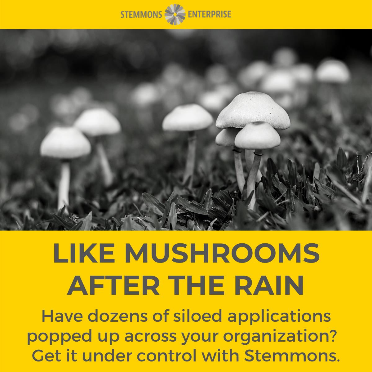 Like Mushrooms After the Rain